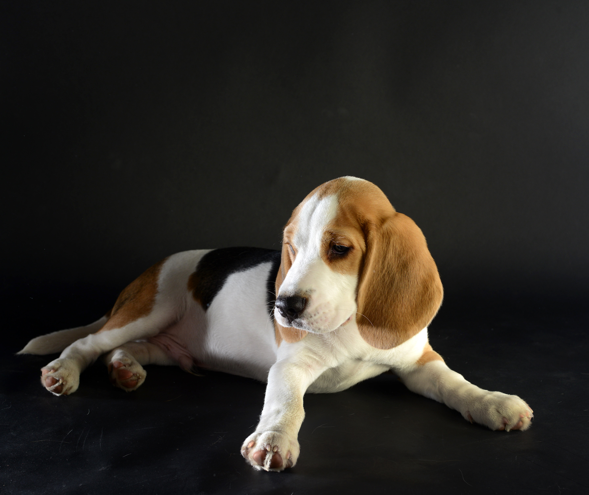 "BEAGEL  ""SNOOPY"""